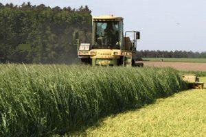Nordrhein-Westfalen erzielt 2013 ertragreiche Getreideernte 85